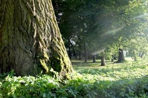 arbres lumiere